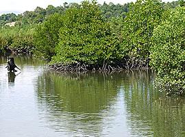 タラカン島自然